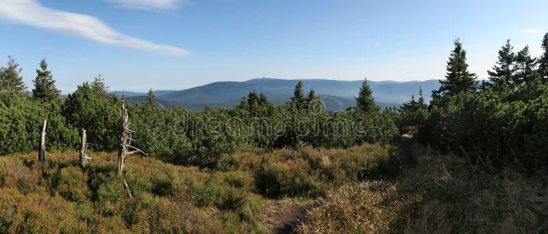 Panorama of the Jeseníky mountains with the peak of Praděd from the slope of Červená hora royalty free stock image