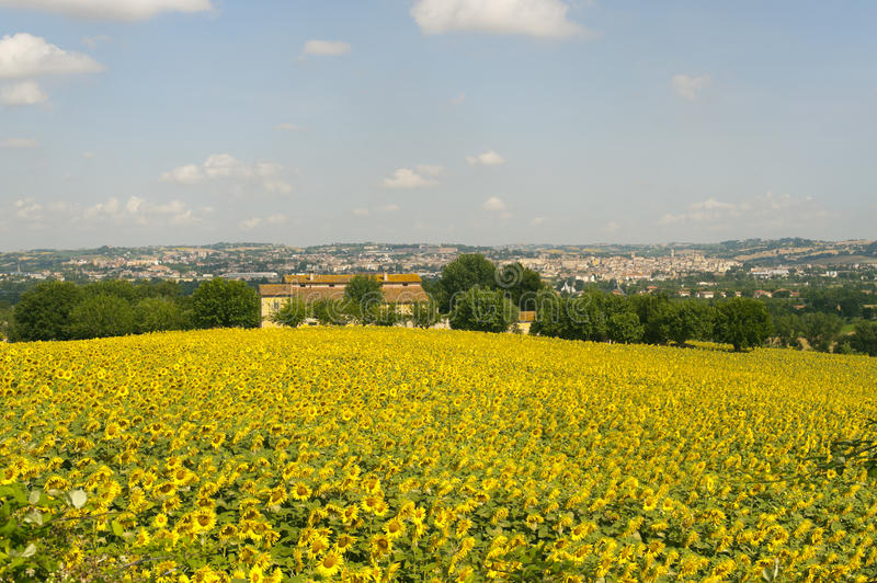 Panorama of Jesi (Marches, Italy) and sunflowers