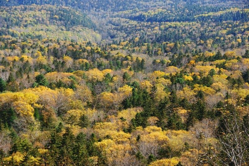Panorama jesień las. zdjęcia stock