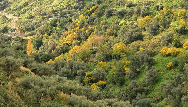Panorama Kurvenreiche Straße führt unten zu herbstliche farbige Bäume in Andalusien stockfotos