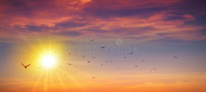 Panorama- lös solnedgång royaltyfri fotografi