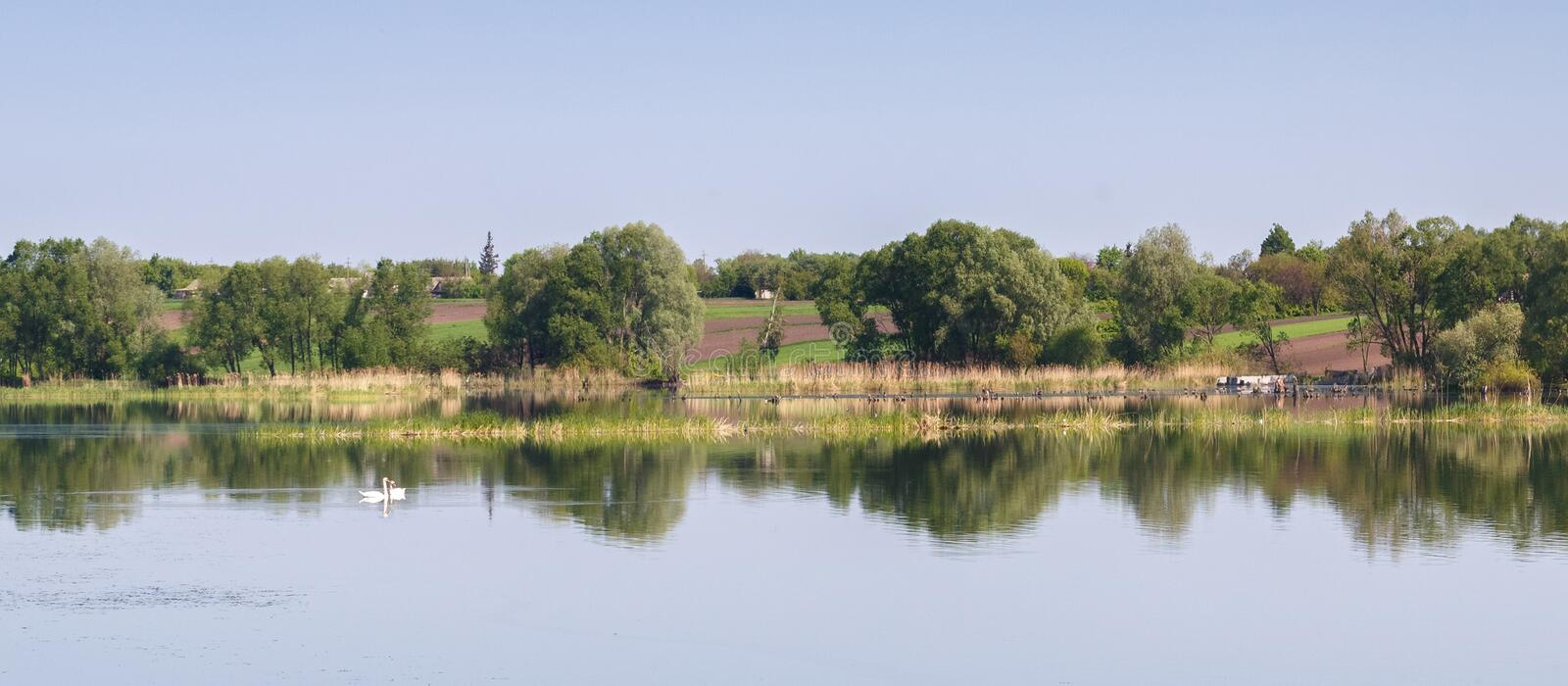Panorama of lake with swans. Panorama of the lake against the backdrop of the village with a pair of lovebirds swans, the landscape of Ukrainian lake, Swans on stock photo