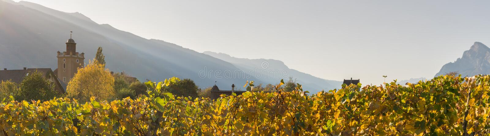 Panorama landscape with alpine village and golden vineyard under cloudless sunset sky with mountain silhouettes royalty free stock photography