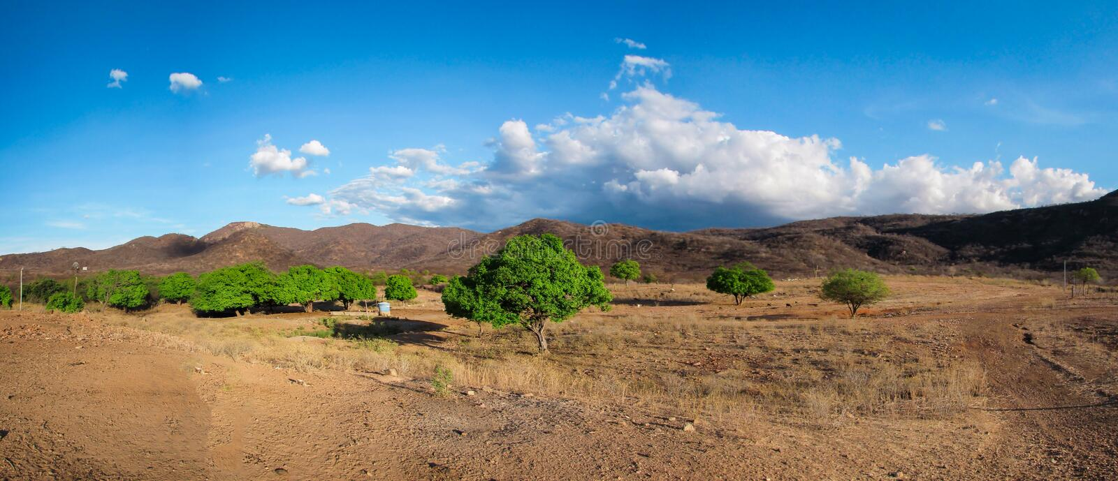 Panorama of a landscape of the caatinga biome in Brazil, it is possible to see the dry colors of the lack of rain in the stock photography