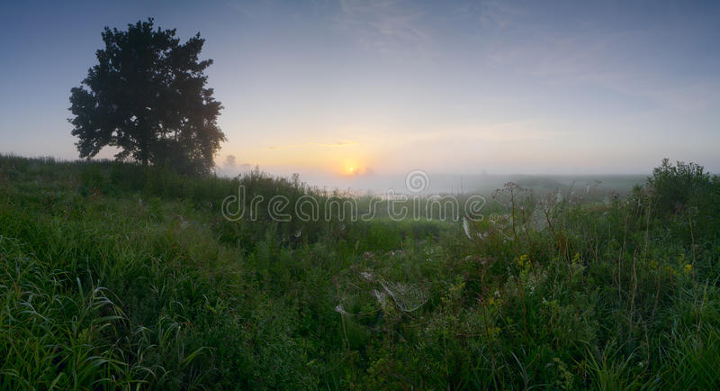 Panorama landscape early morning of August with a single oak horizontal background. Panorama landscape early morning of August with a single oak tree by the lake stock photo