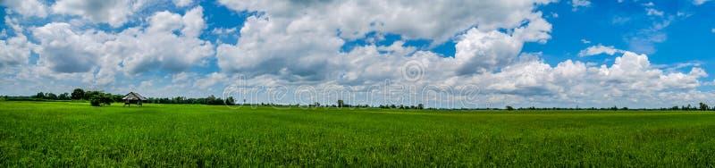 Panorama Landscape. Hut and lush green fields jasmine rice. royalty free stock image