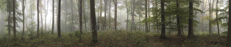 Panorama landscape image of Wendover Woods on foggy Autumn Morning. royalty free stock image