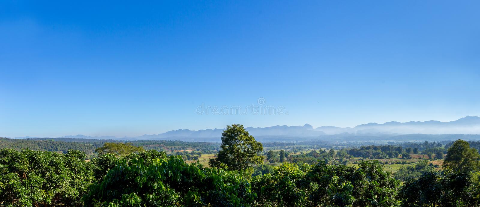 Panorama landscape of mountain forest with alone tall tree in the center. royalty free stock image