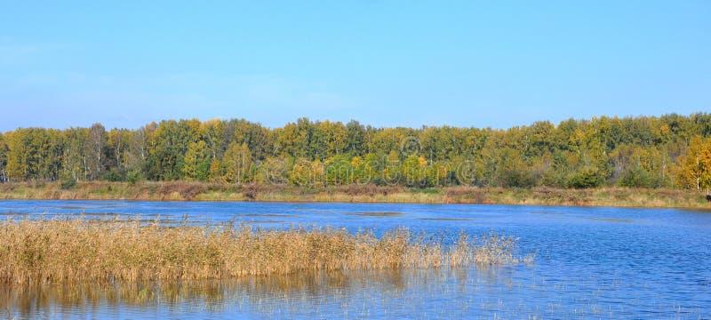 Panorama- landskap av den tidiga hösten sjön, vasserna framme och dengräsplan skogen i avståndet berg västra sayan siberia royaltyfri bild