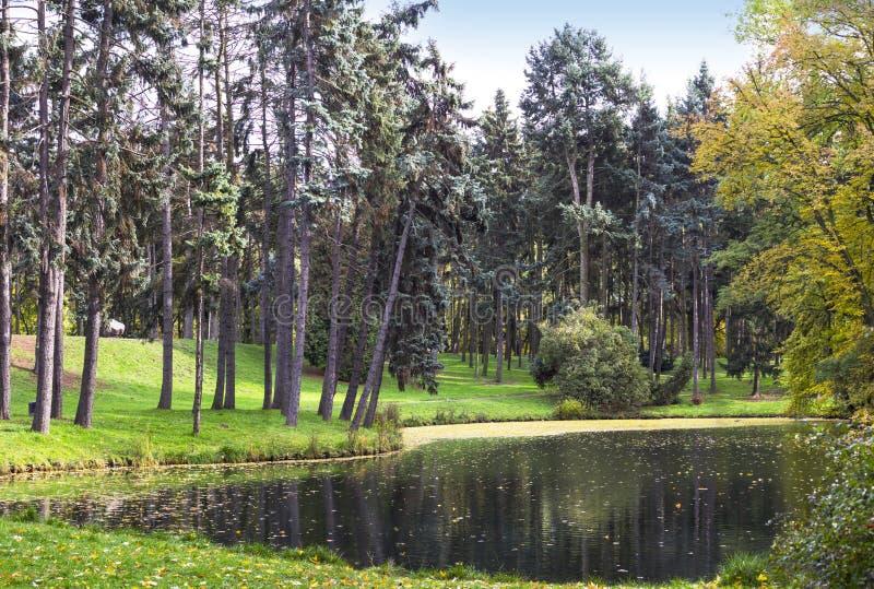 Panorama- landskap för höstskog arkivfoton