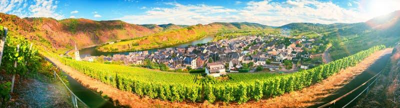 Panorama- landskap med höstvingårdar Mosel Tyskland arkivfoton
