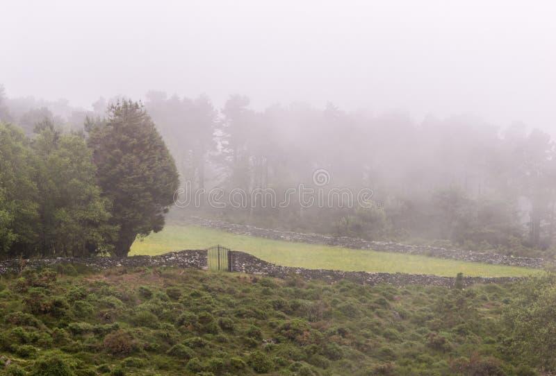 Panorama large de beau pré brumeux Brouillard dense au-dessus d'un mur en pierre dans un pré et silhouettes d'arbres au matin tôt photographie stock