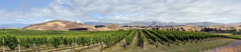 Panorama large superbe des vignes et des collines de Marlborough Sauvignon Blanc image stock
