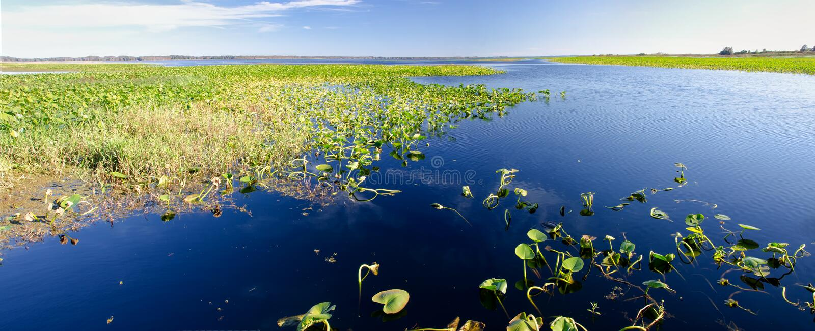 Panorama of lily pads on a freshwater lake, Florida stock photo