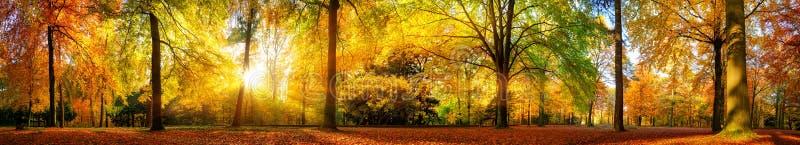 Panorama lindo da floresta no outono fotografia de stock royalty free