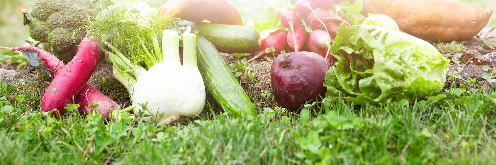 Panorama with lot of various organic vegetables is lying in a fl royalty free stock photography