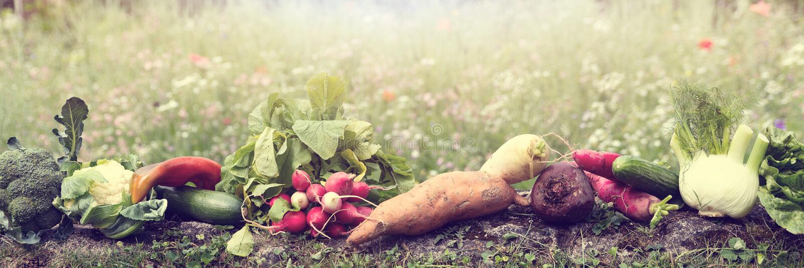 Panorama with lot of various organic vegetables is lying in a fl royalty free stock image