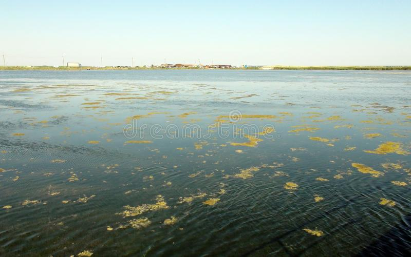 Landscapes of the flora of the Azov Sea and sea evening landscapes near the town of Primorsk of the Zaporizhzhya region. Ukraine. royalty free stock photography
