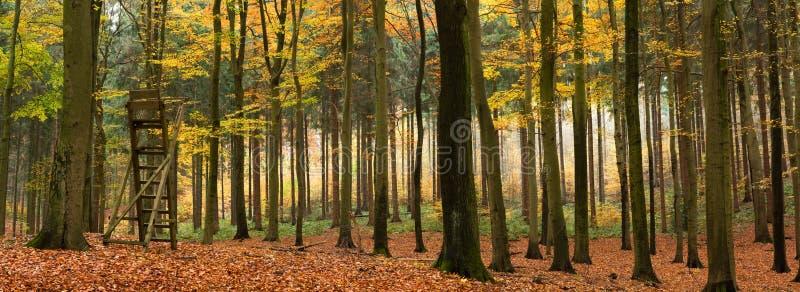 Panorama mélangé de forêt d'automne photo stock