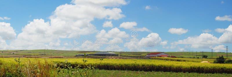 Panorama- Mauritius liggande royaltyfri bild