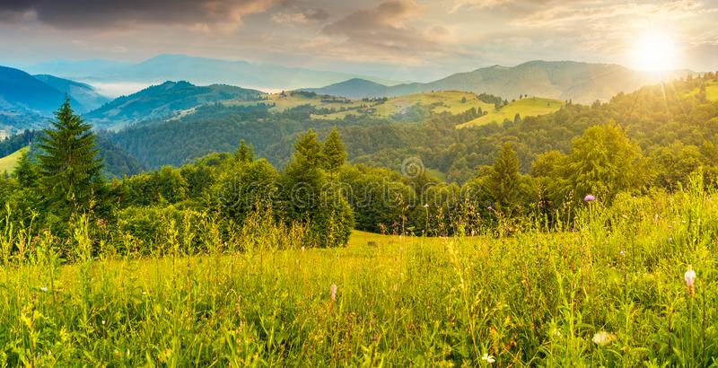 Panorama of a meadow in mountains at sunset royalty free stock images