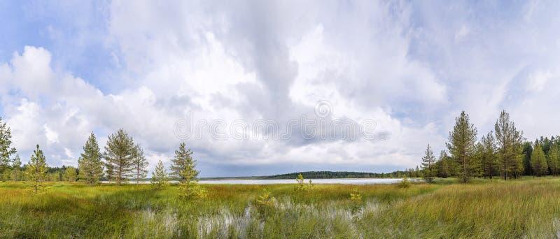 Panorama med en bevuxen sumpig kust av sjön och fören arkivbild