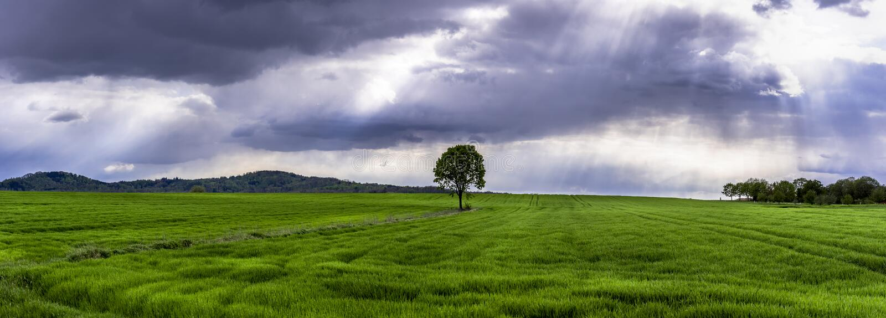 Panorama med gröna kornfält och molnig himmel fotografering för bildbyråer