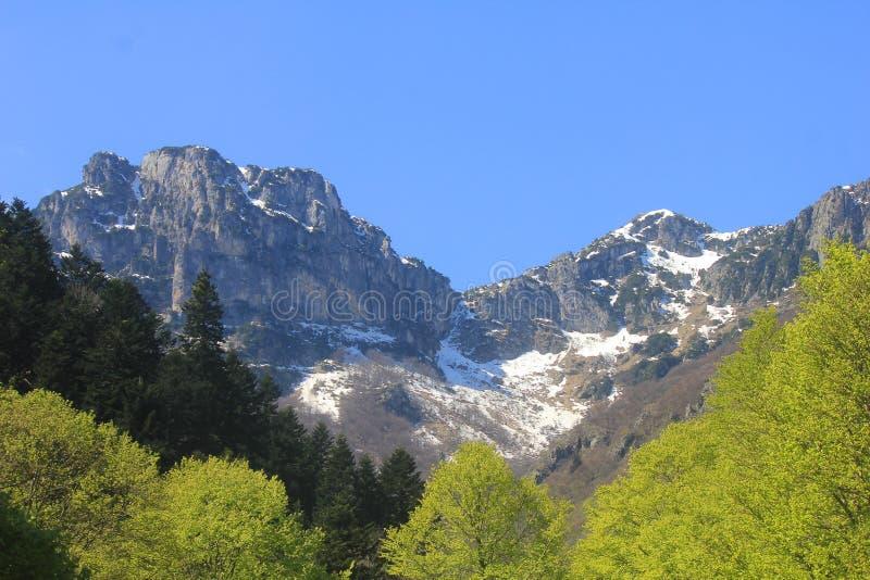Panorama met bergen en bomen in de Lente stock afbeelding