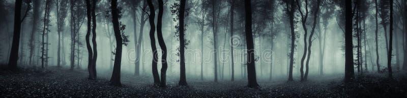 Panorama misterioso di scena della foresta fotografia stock