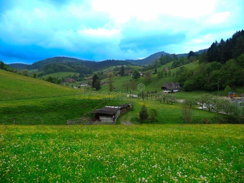 Panorama mit gelben Butterblumeen ein grünes Feld unter den Wolken des Himmels in Deutschland lizenzfreies stockfoto