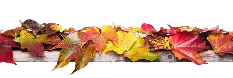Panorama mit Herbstdekoration lizenzfreie stockfotos