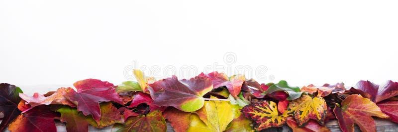 Panorama mit Herbstdekoration lizenzfreie stockbilder