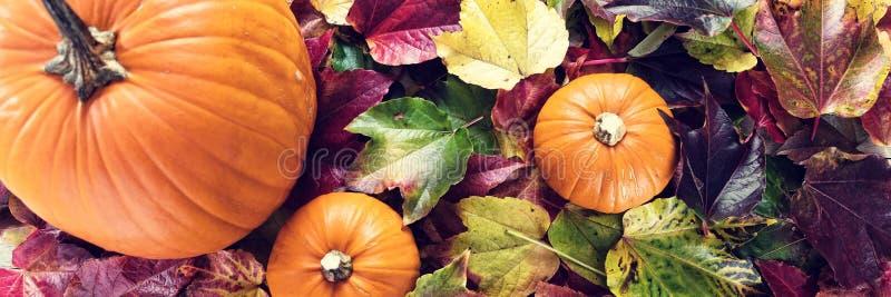 Panorama mit Herbstdekoration lizenzfreies stockfoto