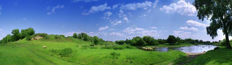 Panorama mit sheeps lizenzfreie stockfotografie
