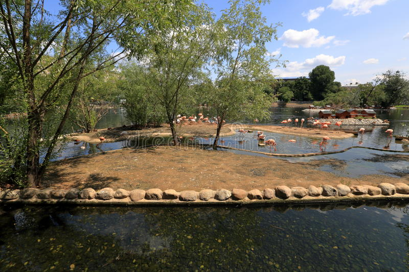 Panorama of the Moscow zoo. General view of the Moscow zoo in the summer, Russia stock photos
