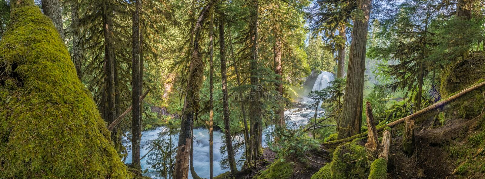Panorama Of Moss Forest Below Sahalie Falls. In Oregon stock images