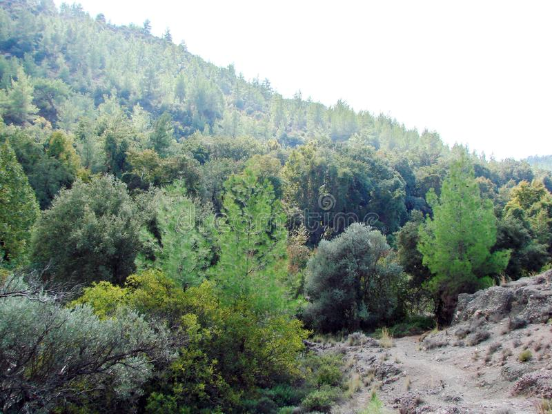Troodos Mountains Cyprus. Landscapes of mountain horizons at an altitude of 500 m above sea level. The panorama of the mountain forest is shone with the sun stock image