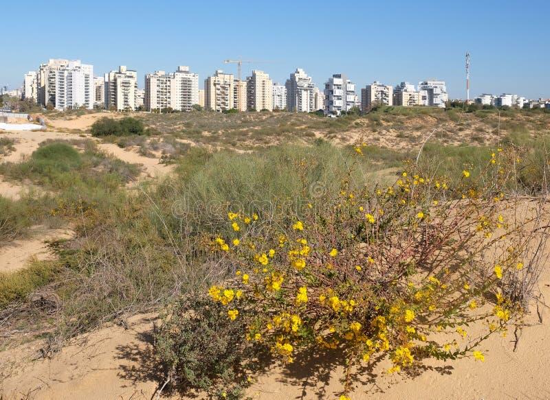 Panorama nowy okręg miasto Holon w Izrael Widok od piasek diun fotografia stock
