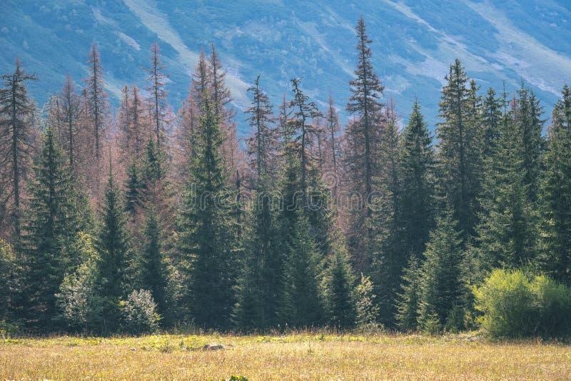 panorama occidental de montagne carpathienne dans le temps clair - retr de cru photo stock