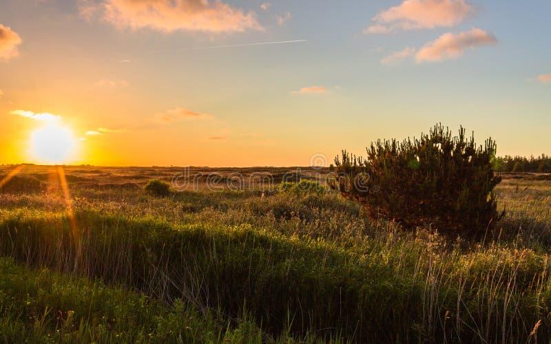 Panorama, op een duinlandschap in het binnenland met een duidelijke weg aan de horizon langs de zonsondergang in Denemarken op he stock fotografie