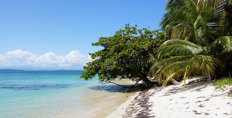 Panorama op een strand met mooie vegetatie royalty-vrije stock afbeeldingen