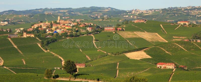 Panorama op wijngaarden in noordelijk Italië. royalty-vrije stock foto's