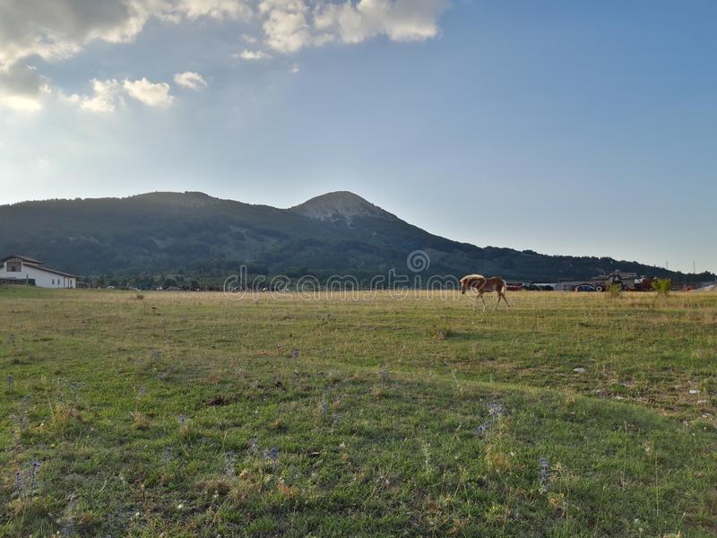 Panorama of Ovindoli& x27;s meadows, with horse, sky at sunset and mountains on the background. Ovindolis stock photo
