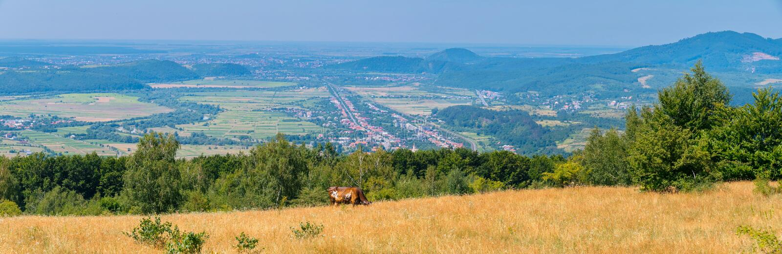 Panorama of pasture with brown cow and distant cities in the valleys between the hills stock photos