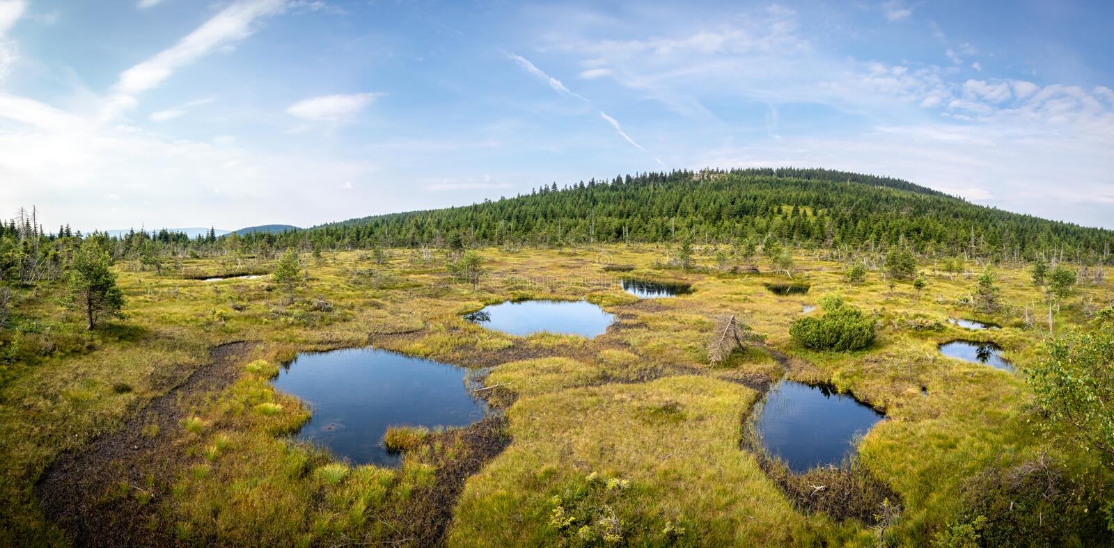 Panorama of peat bog with little lakes under blue sky stock photo