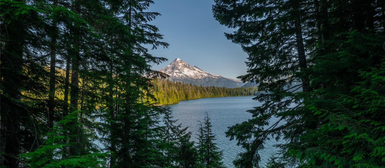 Panorama peering through trees to see Lost Lake and Mount Hood stock photos