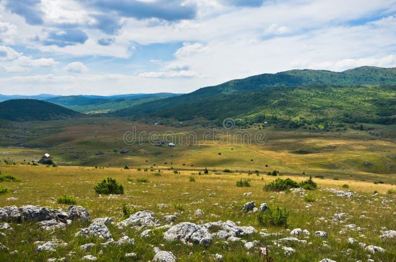 Panorama Pester plateau krajobraz zdjęcie royalty free