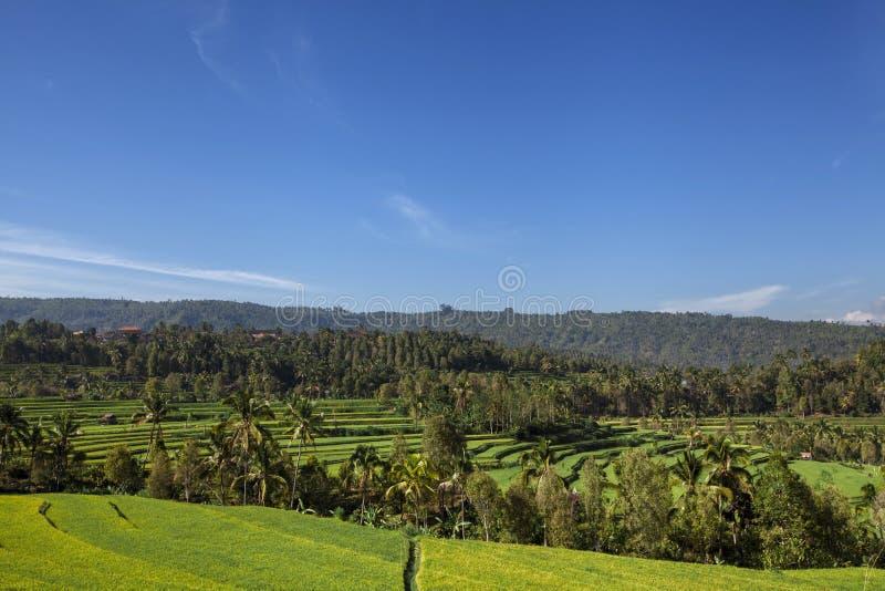 Panorama piękny tarasowaty ryżu pole na Bali Indonezja zdjęcie royalty free