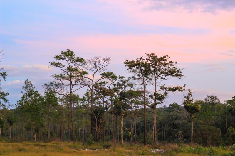 Panorama- plats av träd med bakgrund för blå himmel arkivbilder