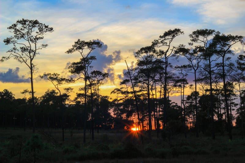 Panorama- plats av träd med solnedgångbakgrund royaltyfria bilder